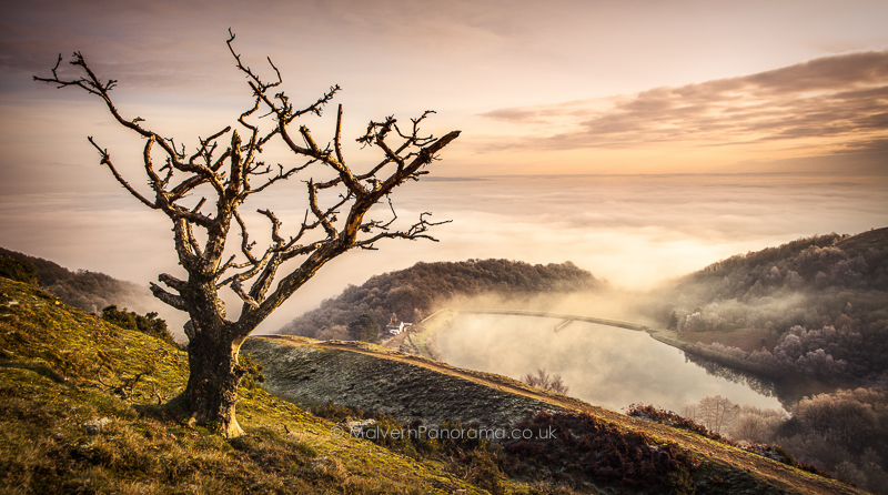 Old Tree - British Camp, Malvern Hills